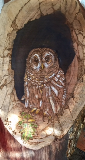 Barred Owl Pyrography